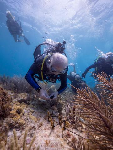 Mote's president and CEO Dr. Michael P. Crosby plants coral onto the reef.
