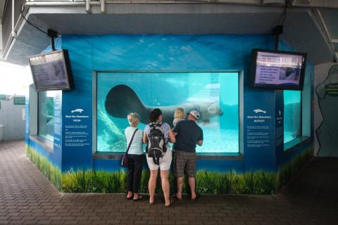 Visitors view Mote Aquarium's resident manatees.